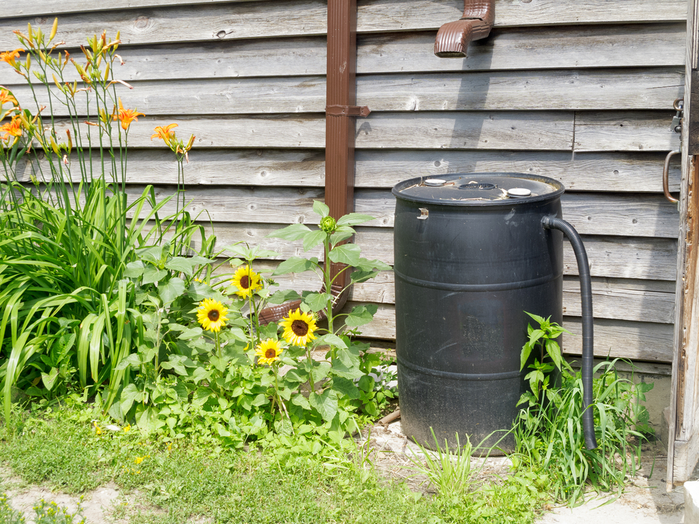 A rain barrel with a hose attached to it.
